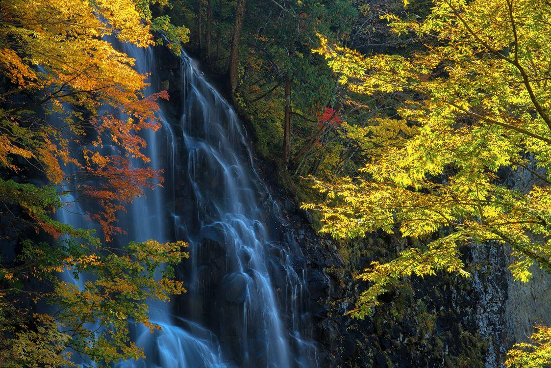 Фото бесплатно лес, деревья, скалы, водопад, природа, осень, природа