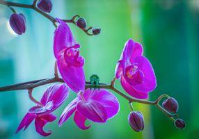 Фото бесплатно орхидея, цветок, цветы