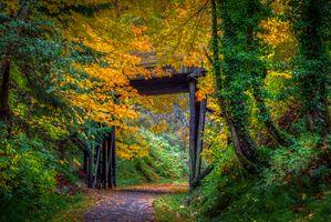 Бесплатные фото осень,лес,деревья,дорога,природа,пейзаж