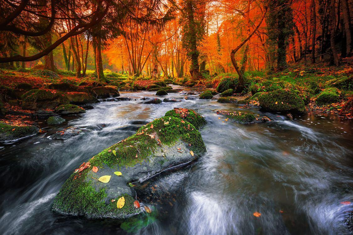 Фото бесплатно осень, река, лес, деревья, осенние листья, краски осени, осенние краски, природа, пейзаж, пейзажи