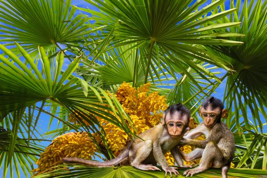 Photo free palm, monkey, tree