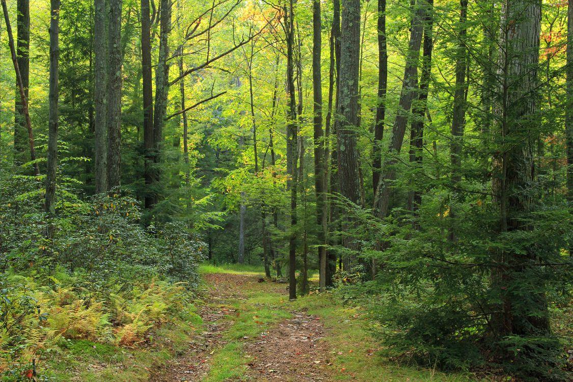 Обои дорога, глухой лес, летний день, лес, деревья, пейзаж картинки на телефон
