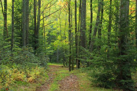 Заставки дорога, глухой лес, летний день