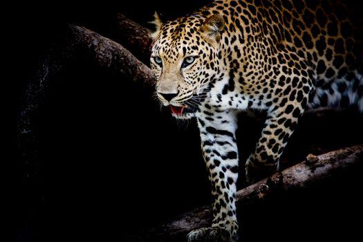Фото хищник, животное без регистрации