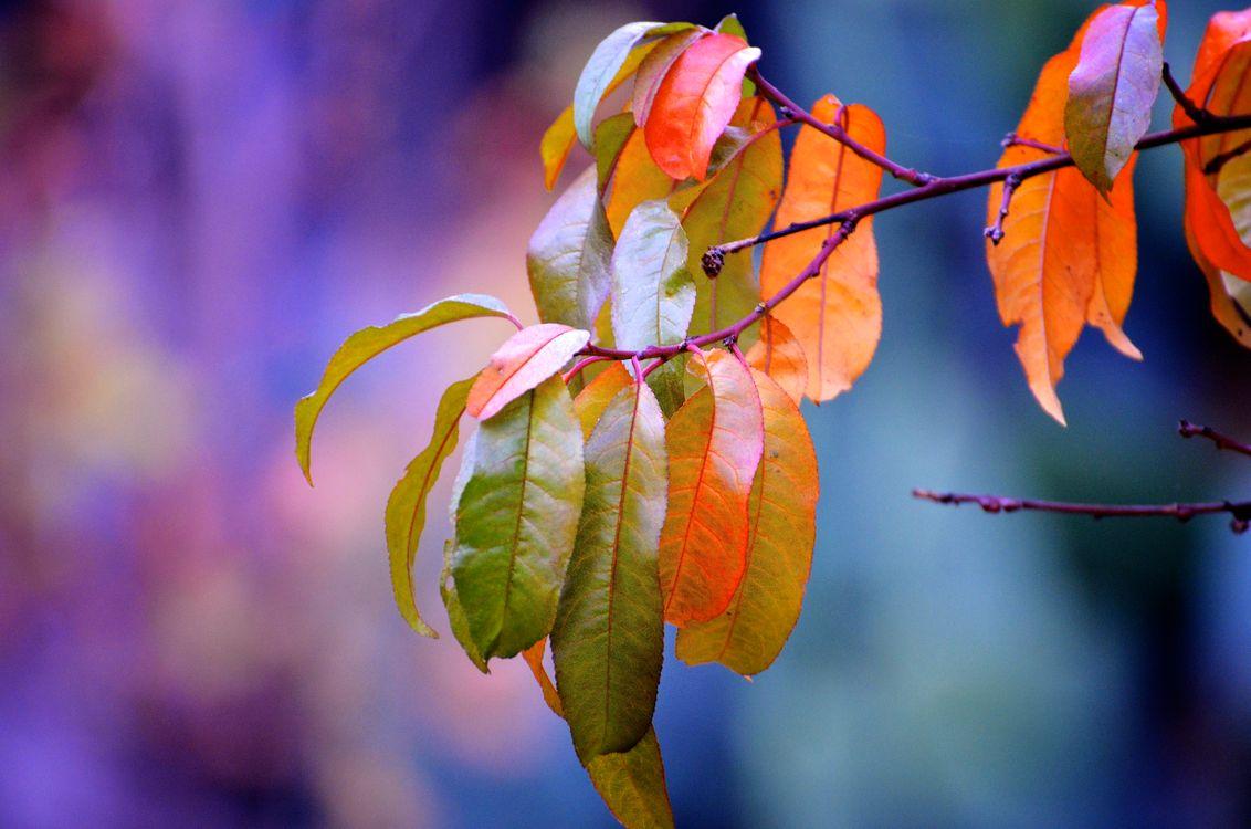 Фото бесплатно макро, ветка, осень цветы - на рабочий стол