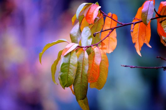 Photo free close-up, branch, autumn colors