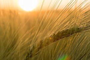 Photo free grass, horizon, plant