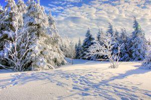 Бесплатные фото зима,снег,сугробы,деревья,небо,облака,природа