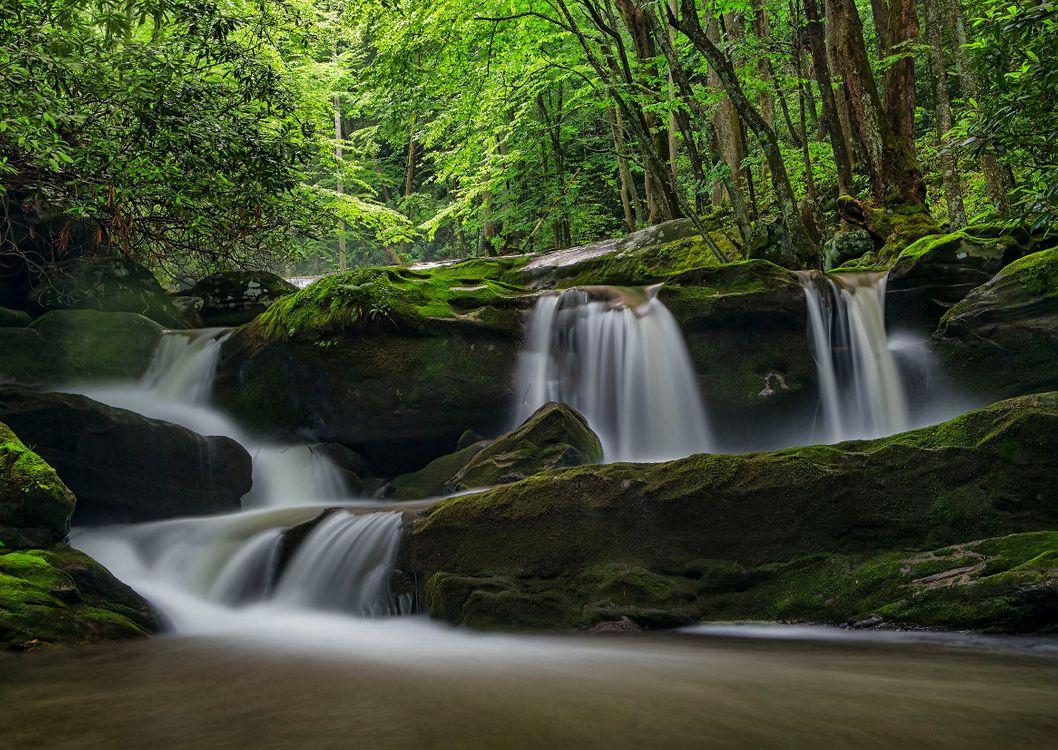 Фото бесплатно Great Smoky Mountains National Park, водопад, лес - на рабочий стол