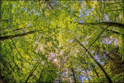 Бесплатные фото лес,деревья,кроны,верхушки деревьев,солнечные лучи,природа