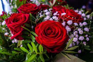 Цветы розы букет