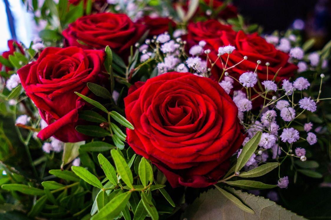 Цветы розы букет · бесплатное фото