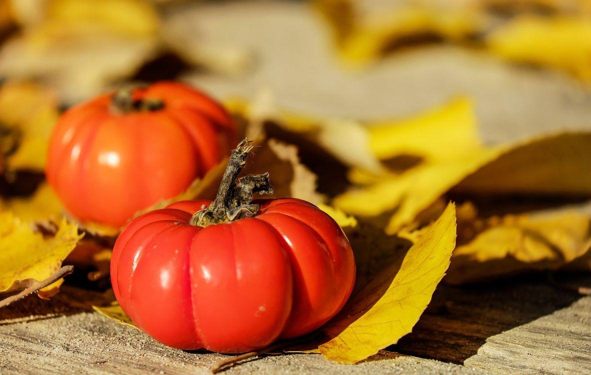Фото бесплатно помидоры, декоративные, листья - на рабочий стол