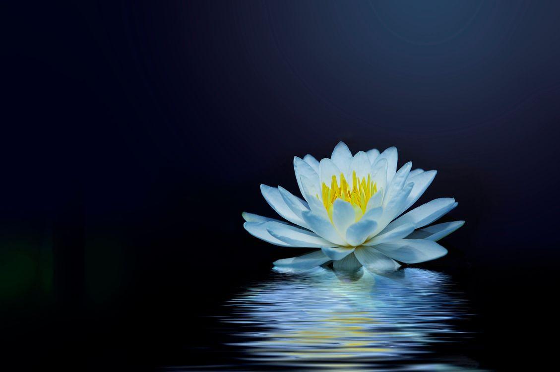 Фото бесплатно водяная лилия, цветок, водоём, отражение, блики, флора, цветы - скачать на рабочий стол