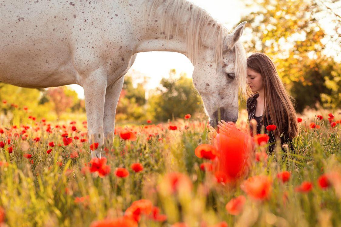 Фото бесплатно белая лошадь, цветы мака, женщина - на рабочий стол