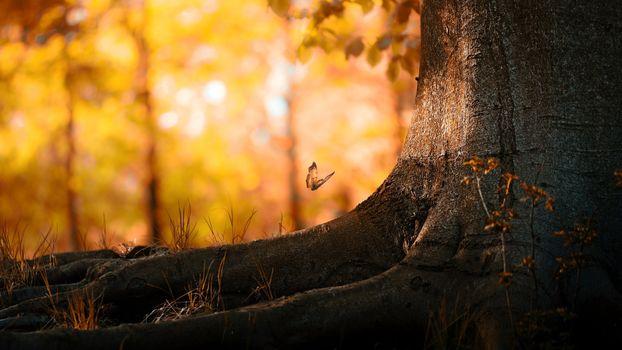 Фото бесплатно бабочка, осень, боке