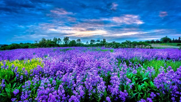 Photo free nature, sunset, lavender