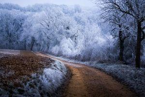 Фото бесплатно мороз, зима, лес