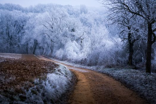 Photo free frost, forest, Germany