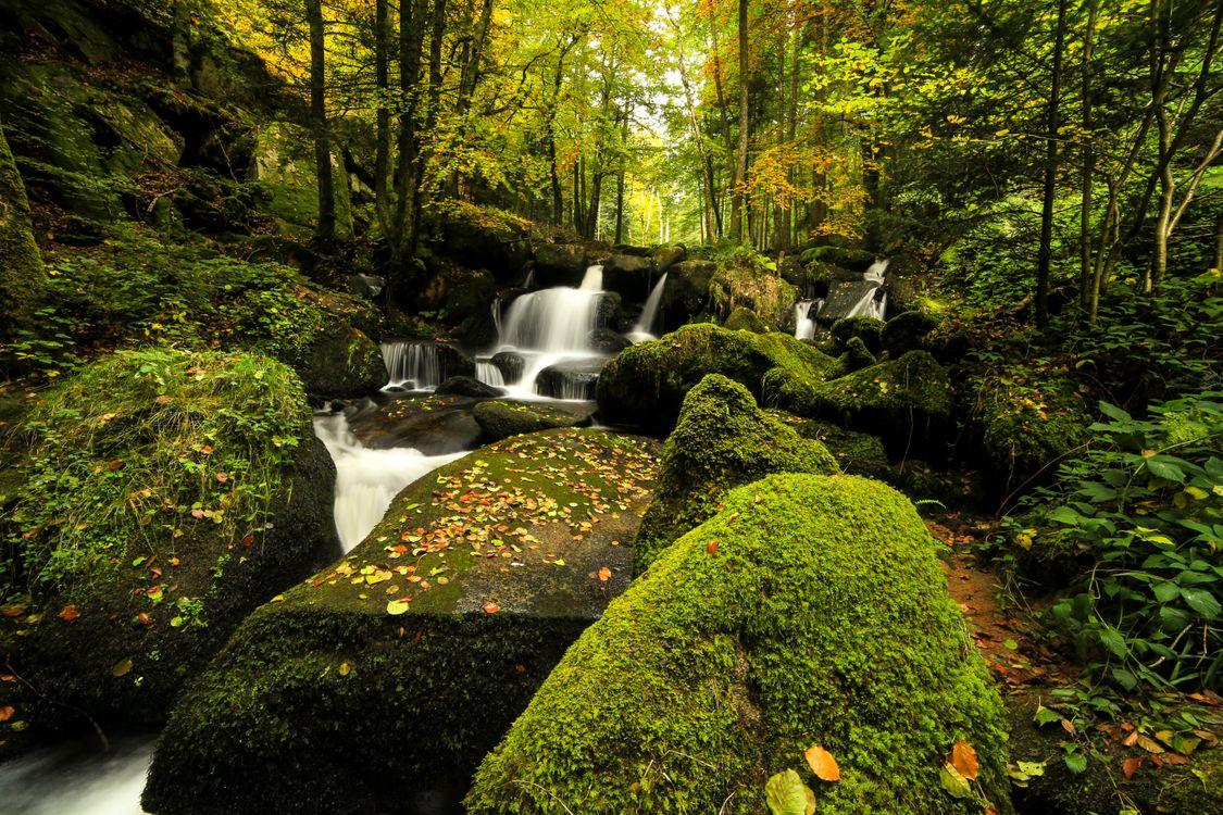 Фото бесплатно камни, лес, листва - на рабочий стол