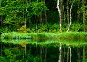 Бесплатные фото озеро, отражение, лес, деревья, природа