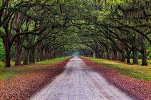Фото бесплатно осень, пейзаж, дорога