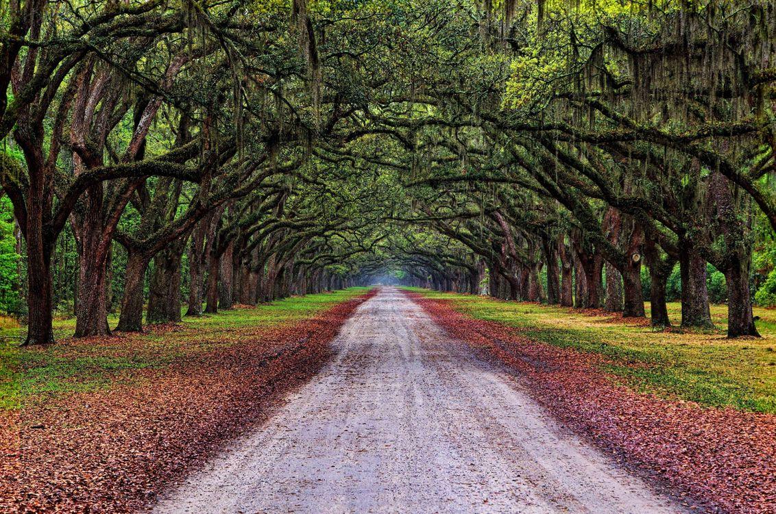 Фото бесплатно осень, пейзаж, дорога, деревья, природа - скачать на рабочий стол