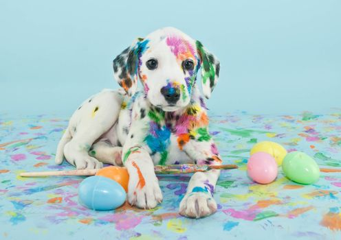 Photo free puppy, paint, play