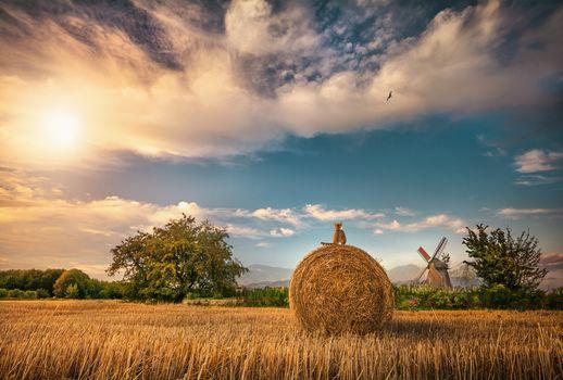 Бесплатные фото поле,деревья,сено,кошка,кот,мельница,небо,облака,природа,пейзаж