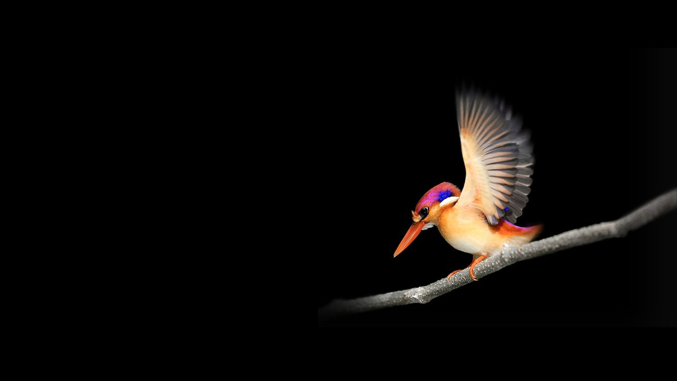 Фото бесплатно дятел, крылья, птицы - на рабочий стол