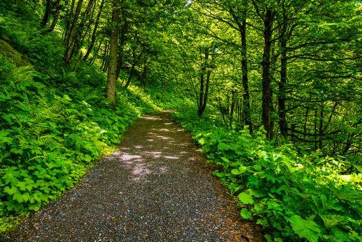 Photo free road, trees, Austria Bad Gastein