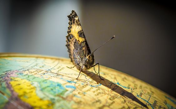 Photo free butterfly, insects, globe
