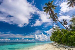 Бесплатные фото Malaysia,Tropical Paradise,Sabah,море,остров,пляж,пальмы