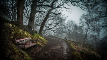 Photo free nature, benches, trees