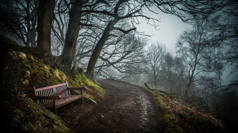 Фото бесплатно природа, скамейки, деревья - на рабочий стол