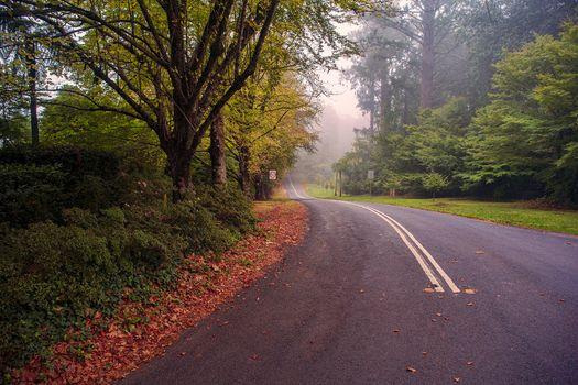 Фото бесплатно дорога, осень дорога, осенние листья