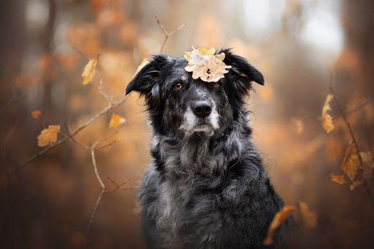Dog and autumn leaf · free photo