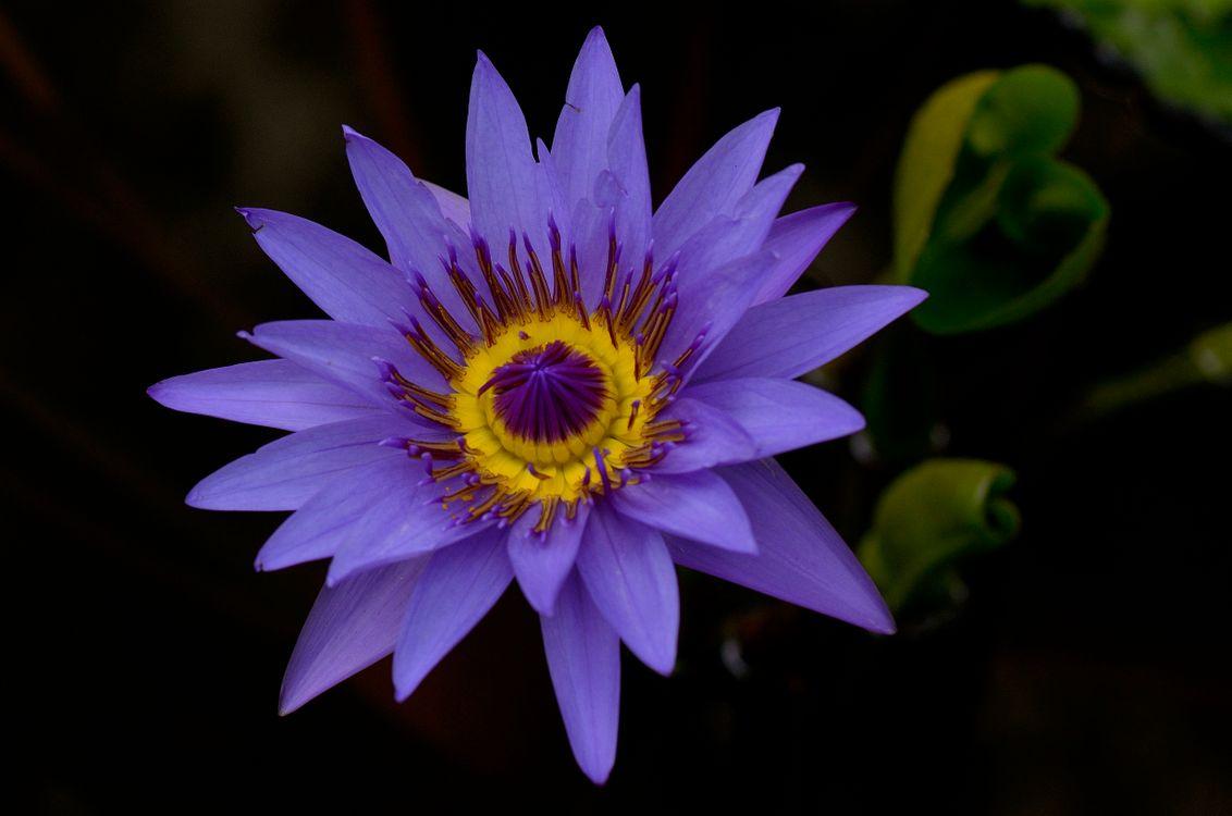 Большие лилии · бесплатное фото
