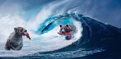 Бесплатные фото волна,медведи,рыба,панорама,фотошоп,art,животные