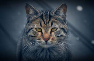 Фото бесплатно кот, кошка, кошак