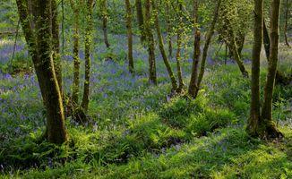 Заставки лес, деревья, цветы