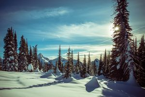 Фото бесплатно Mt Rainier National Park, зима, горы