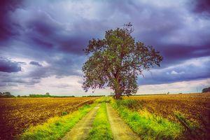 Одинокое дерево по среди поля