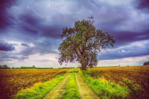 Lonely tree among the fields · free photo