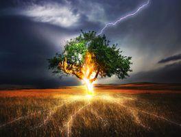 Фото бесплатно поле, непогода, дерево