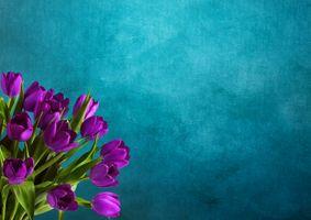 Фото бесплатно тюльпаны, цветы, букет, флора, синий фон