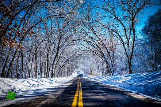 Winter road under the branches of trees · free photo