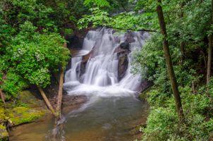Фото бесплатно лес, деревья, речка