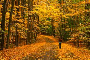 Заставки дорога, девушка, цвета осени