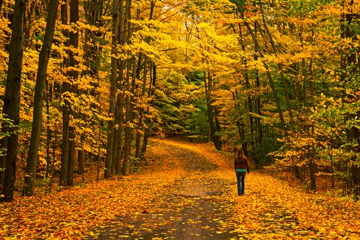 Photo free road, girl, autumn colors